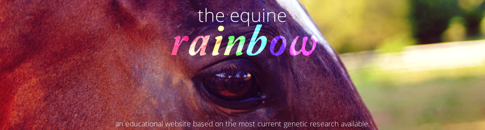 The Equine Rainbow